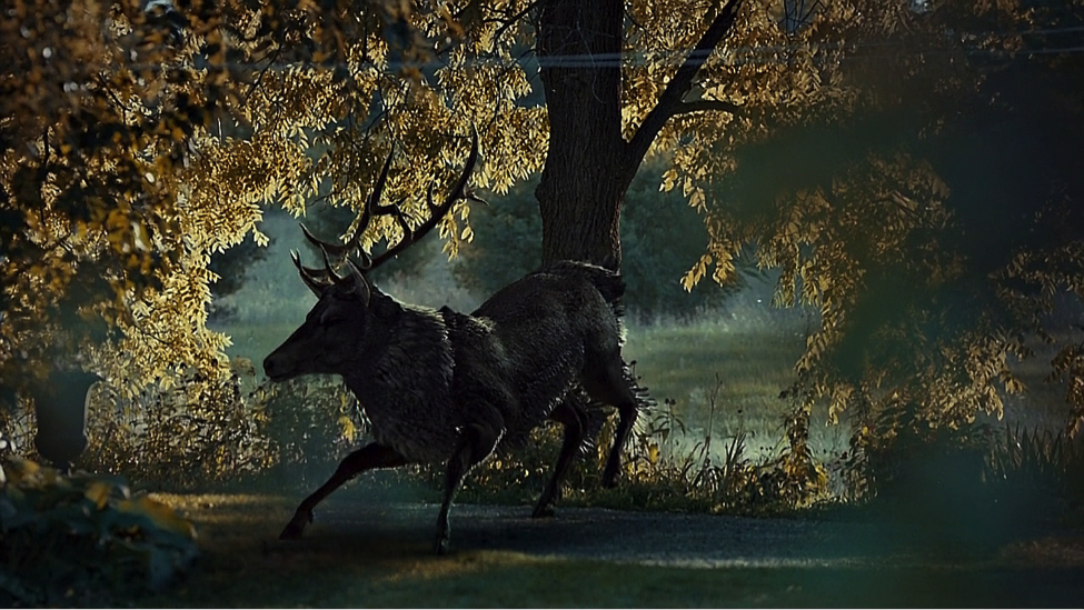 The stag of Will Graham's dreams (Hannibal, NBC)
